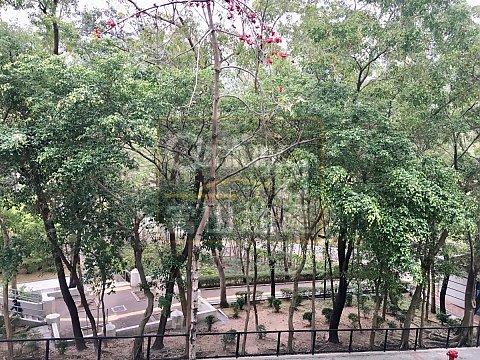金國大廈  41校網