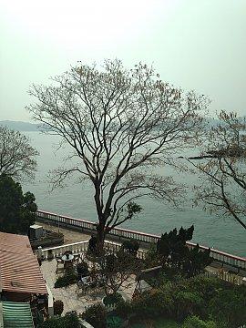 龍珠島平房